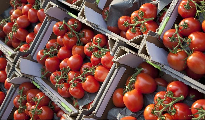 Agricultural packaging for tomatoes.